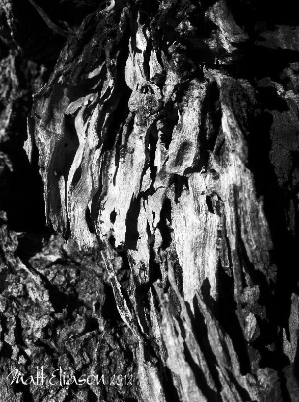 wood in black and white