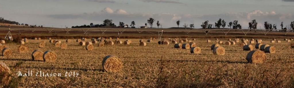 summer crop bails darling downs qld