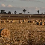 Field of bails - Felton, Queensland.