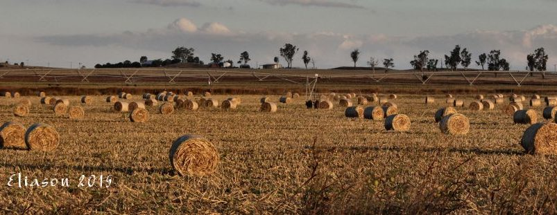summer crop bails darling downs qld