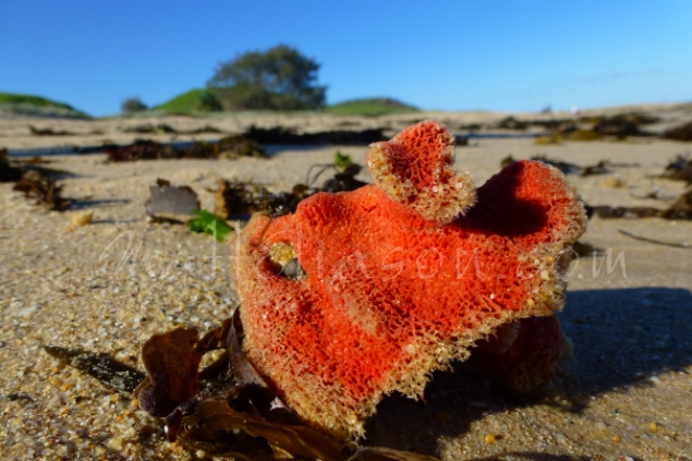Orange sponge on beach