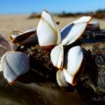 Shells on wood