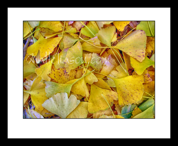 framed golden leaves photo