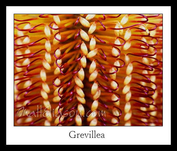 grevillea digital print