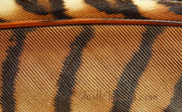 feather close up - instant download.