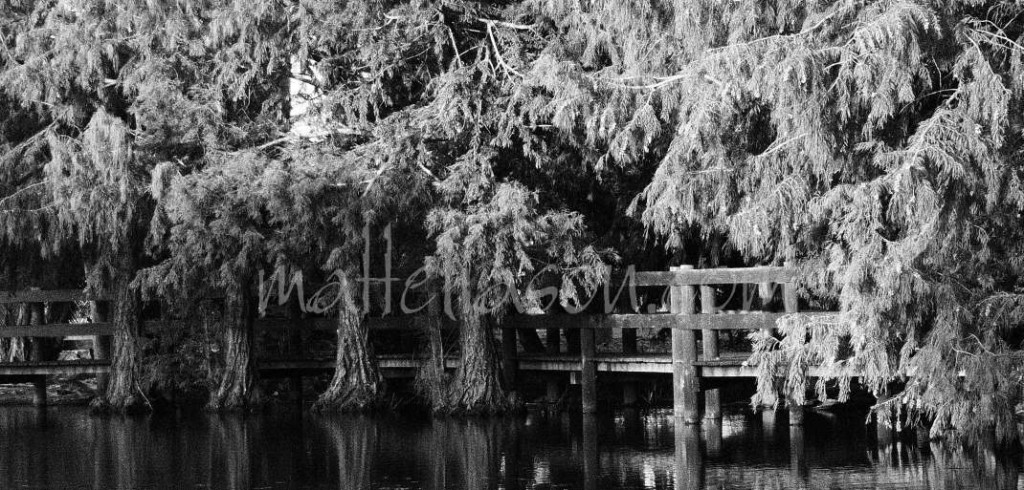 Photos of boardwalk trees in black and white