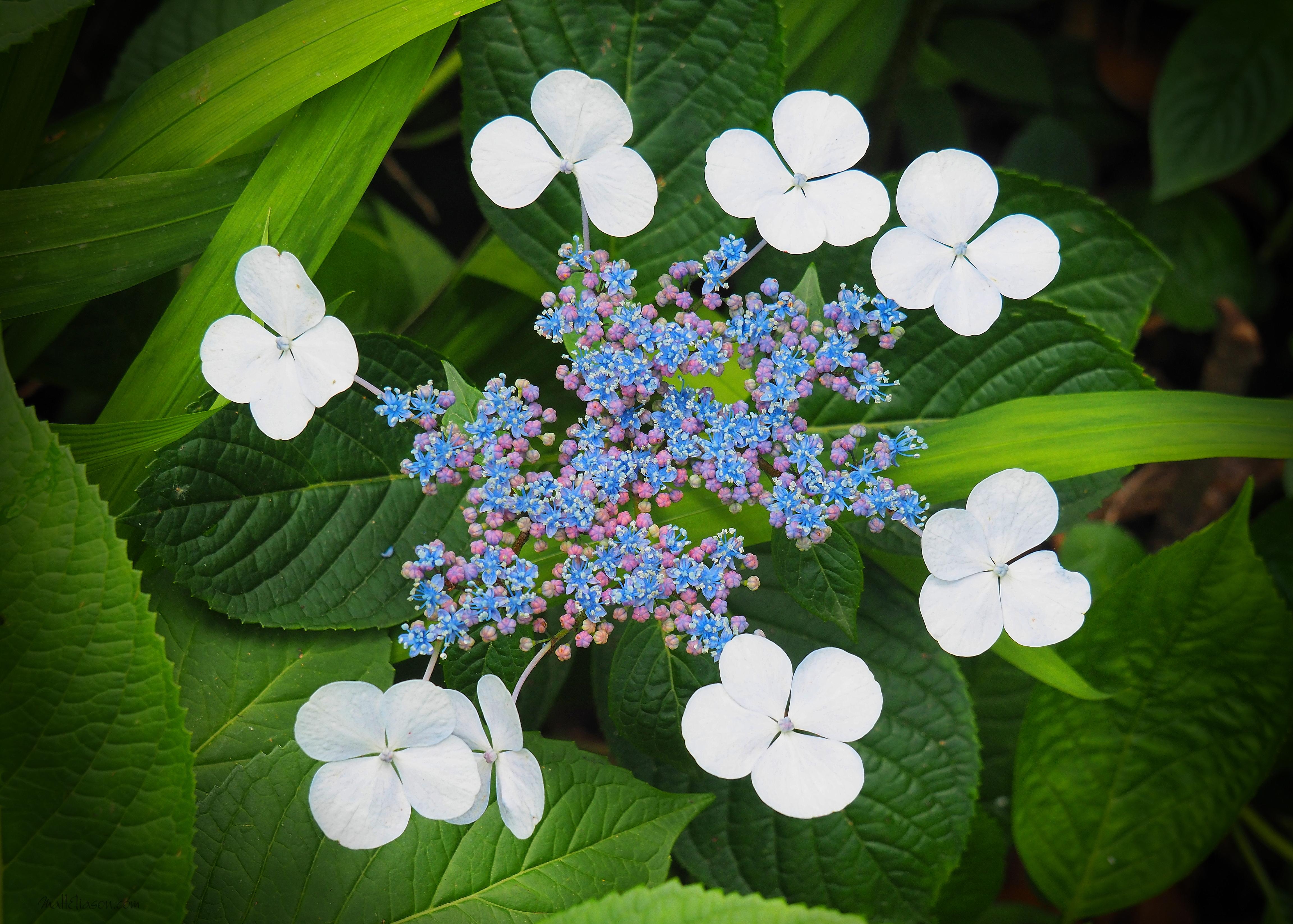 White flowers around blue mightylinksfo